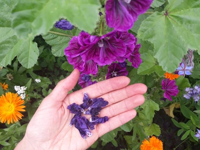 doula-douce-fleurs